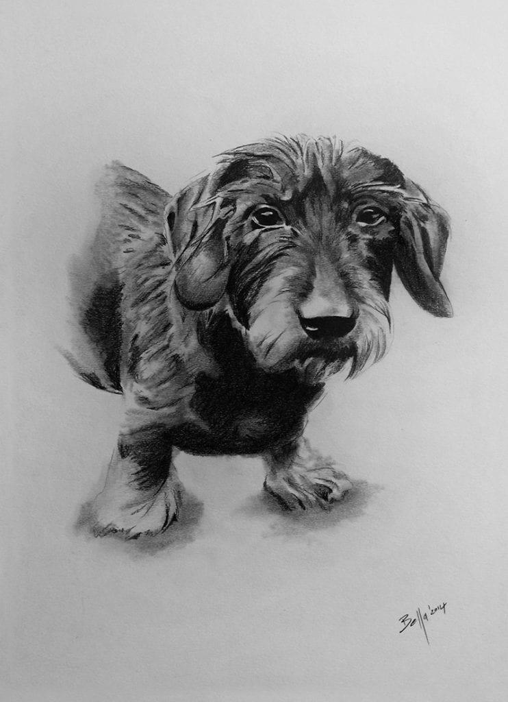 Hundeportrait eines Dackels