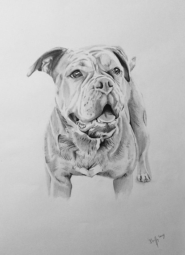 Hundezeichnung eines großen Hundes
