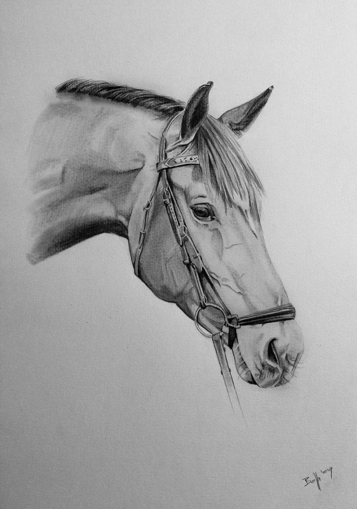 Pferdeportrait in der Größe DIN A3
