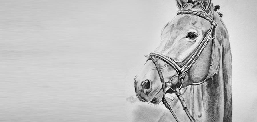 Portraitzeichnung von Hunden, Pferden, Katzen und mehr