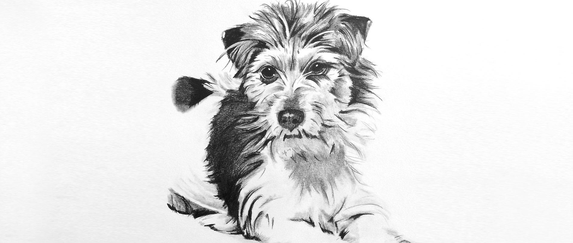 Hundezeichnung mit Bleistift und Graphit