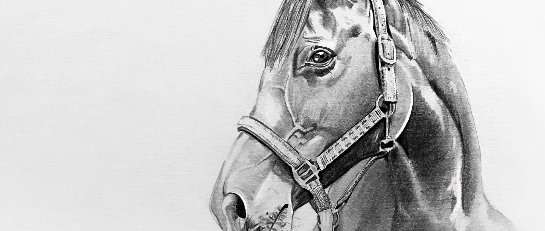 Pferdeportrailt gezeichnet