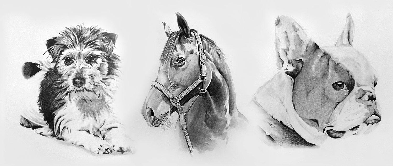 Tierzeichnungen mit Bleistift und Graphit