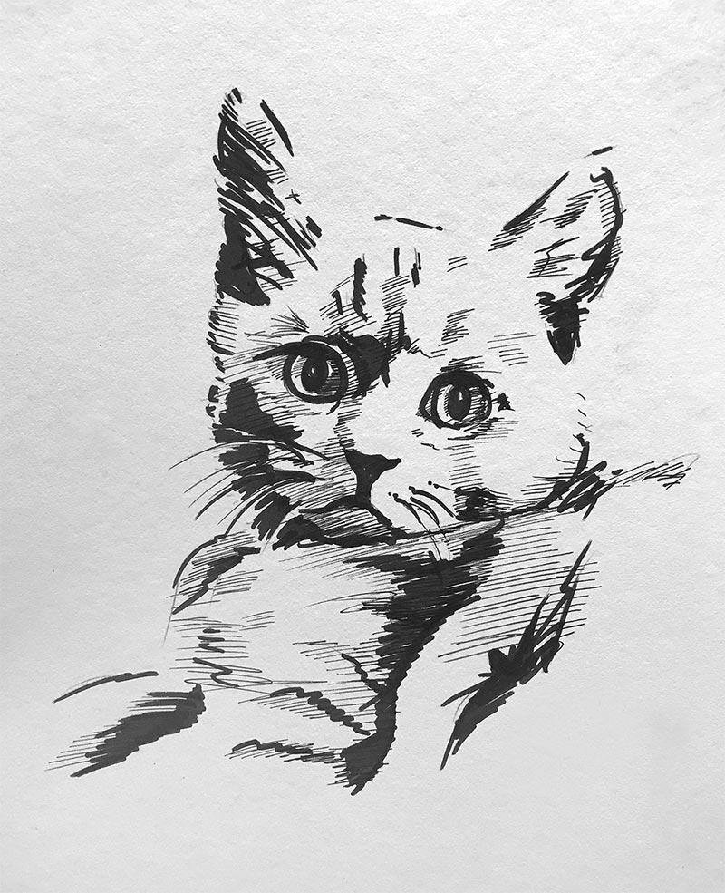 Skizze einer Katze mit Tusche